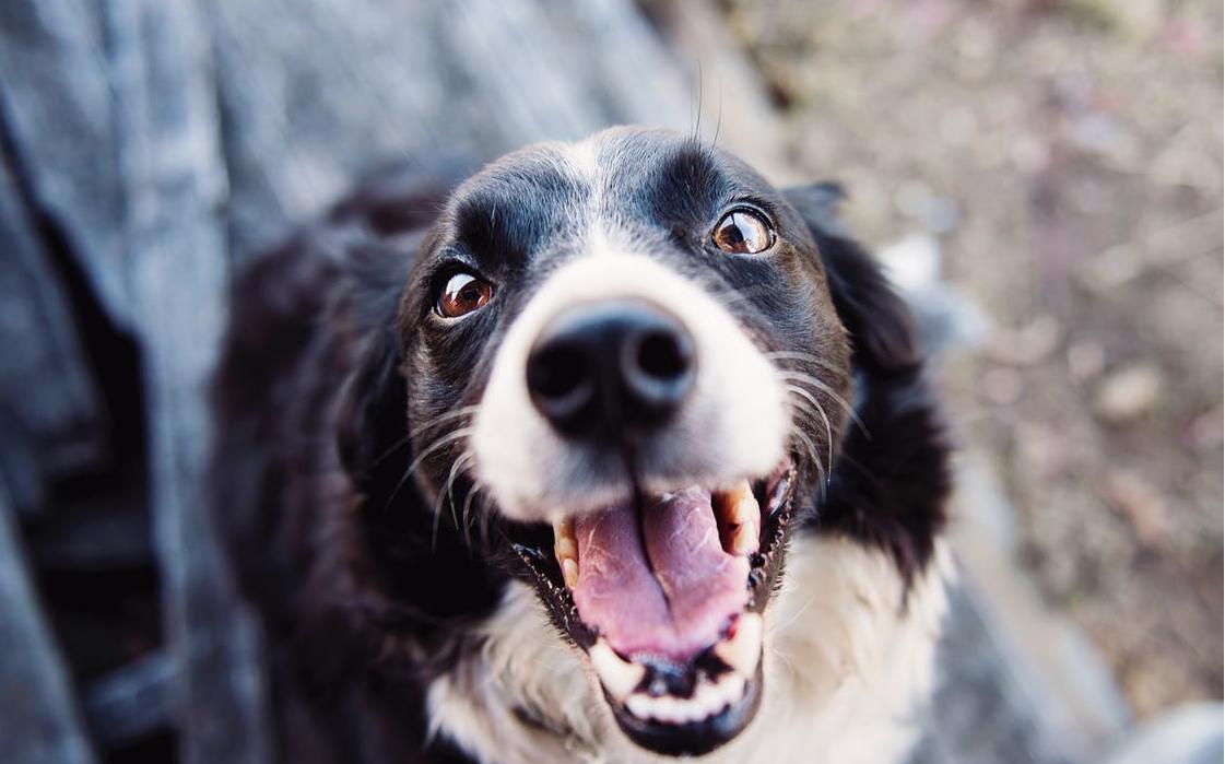 Bomosa fa d'intermediària entre gossos abandonats i famílies d'acollida